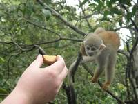 Feeding monkeys in Manaus